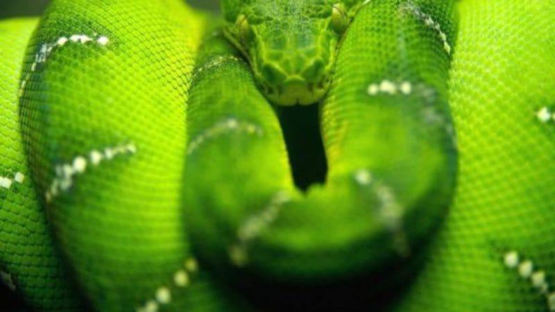 jaloezie het groene monster